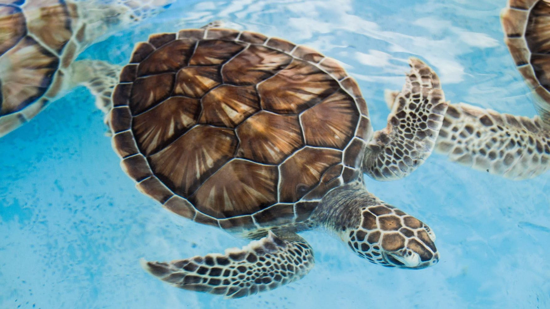 close up photo of sea turtle