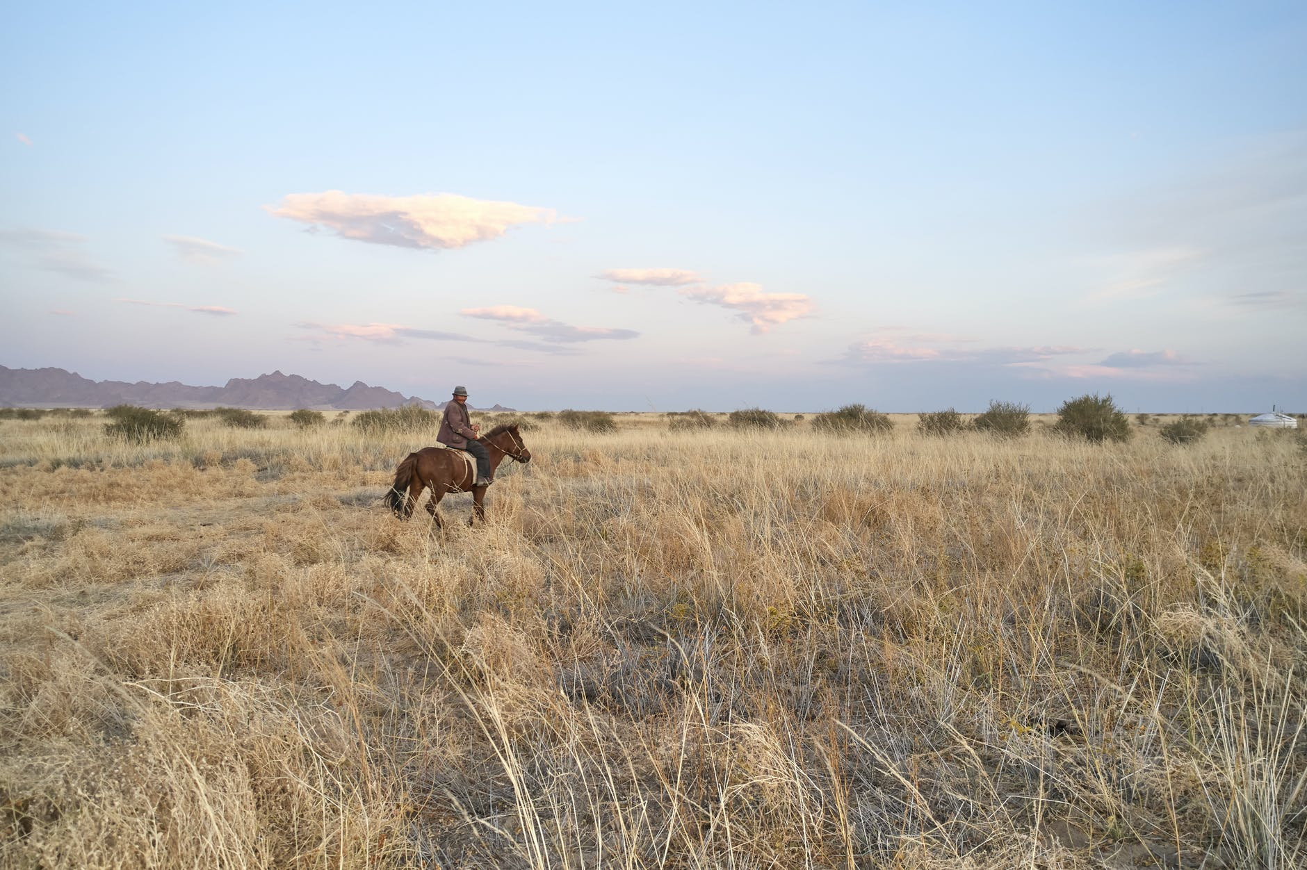cattle man riding horse in remote field