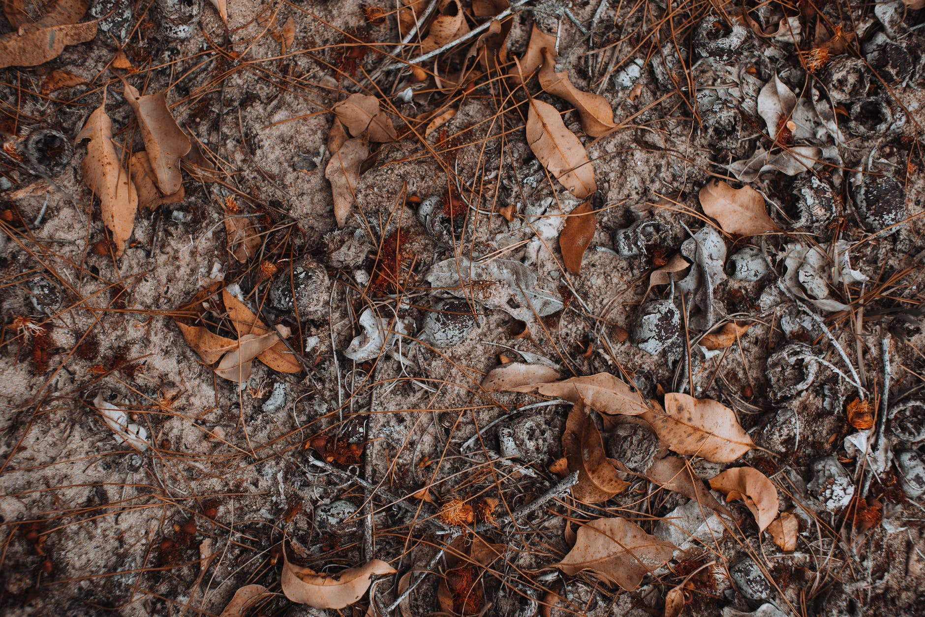 dry fallen leaves and short branches on frozen ground